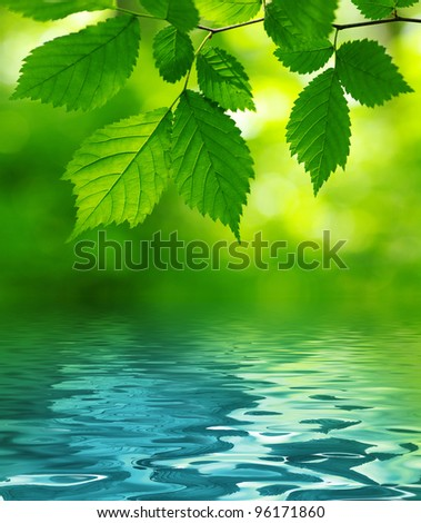 Green leaves over the water - stock photo