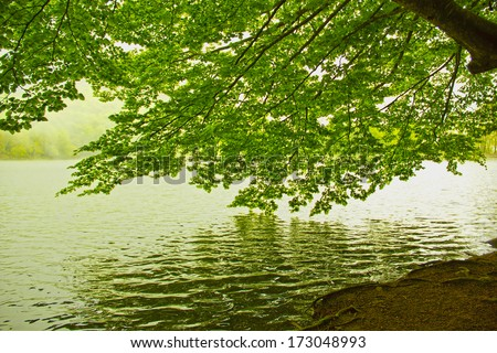 Green leaves reflecting in the water - stock photo