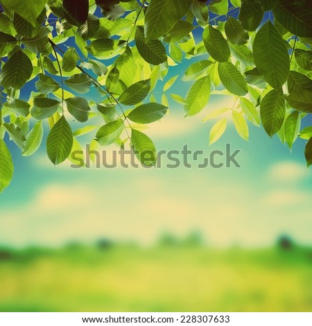 Green leaves. Retro stale. - stock photo