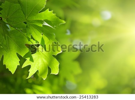 green leaves, shallow focus - stock photo