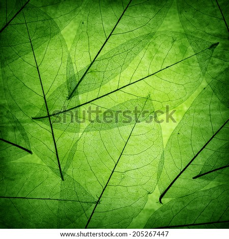 Green leaves vintage background - stock photo