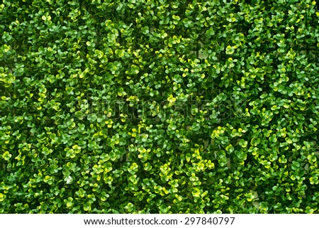 green leaves wall background. - stock photo