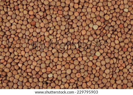 Green lentil background - stock photo