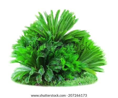 Green lush bushes isolated on white - stock photo