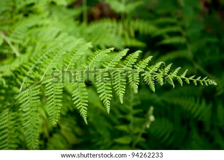 Green lush ferns growing in forest in wild - stock photo