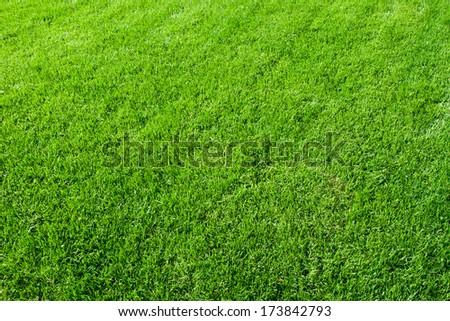 Green lush grass background under bright sunlight - stock photo