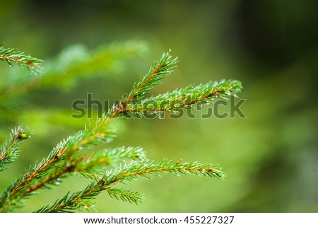 Green lush spruce branch. Fir branches. Spruce tree branch detail. Spruce background. Sprig of green spruce. Coniferous forest. Background with bright spruce branches. - stock photo