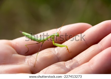 Green mantis on a female hand. Close up - stock photo