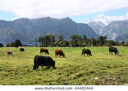 Green meadow and mountain landscape including Aoraki Mt. Cook of Southern Alps. New Zealand vista. - stock photo