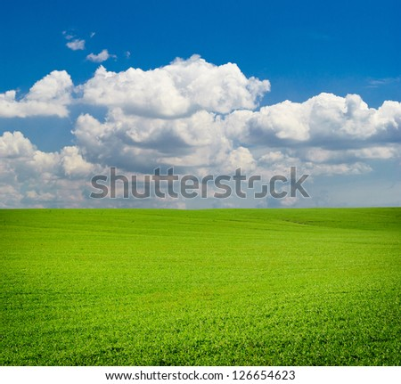 Green meadow. Composition of nature - stock photo