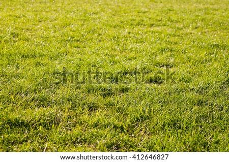 Green meadow grass field - stock photo