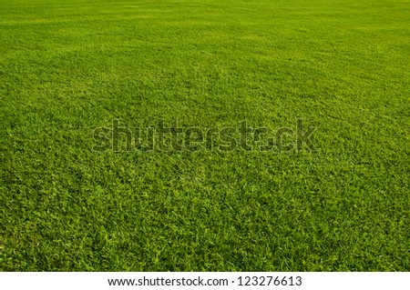 Green meadow in perspective. - stock photo
