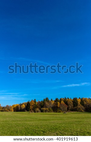 Green meadow in the foreground. Beautiful Panoramic landscape with pine and birch forest near field. October bright sunny day.Colorful trees, grass and cloudless sky with place space for your own text - stock photo
