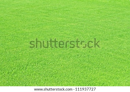 green meadow texture and material - stock photo