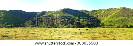 Green meadow valley with cattles near Ojai and Ventura. - stock photo