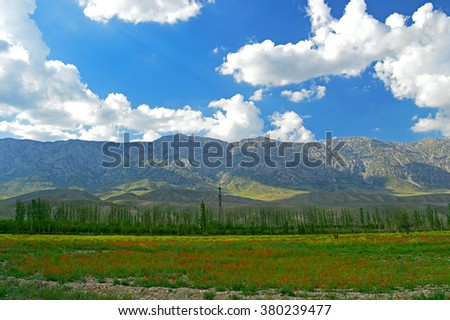 Green meadow with poppy flowers and mountains in background, Haidarkan area, Kyrgyzstan - stock photo