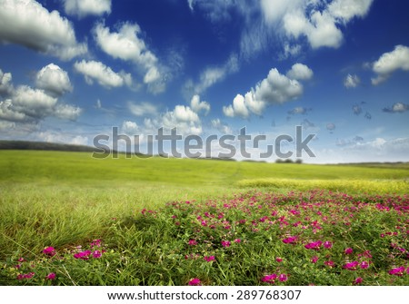 green meadow with sky and clouds and pink flowers - stock photo
