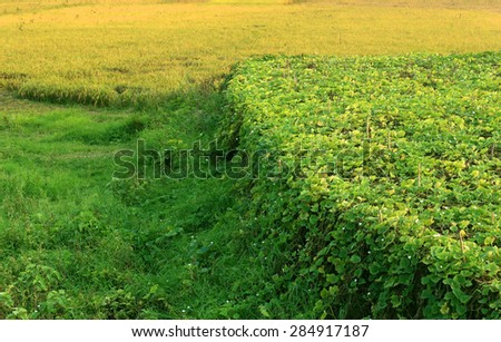 Green meadows and vegetable field in rural Bangladesh - stock photo
