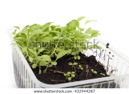 green medicinal plant on white background isolated - stock photo