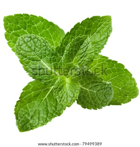 green mint close up isolated on white background - stock photo