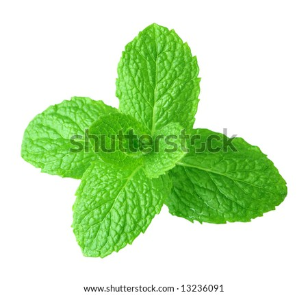 Green mint isolated on white background - stock photo