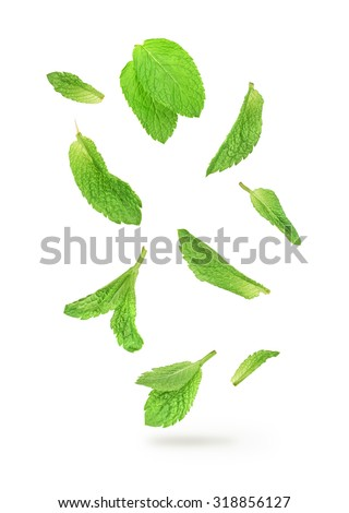 green mint leaves falling in the air isolated on white background - stock photo