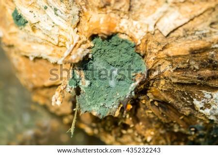 Green Mold - stock photo