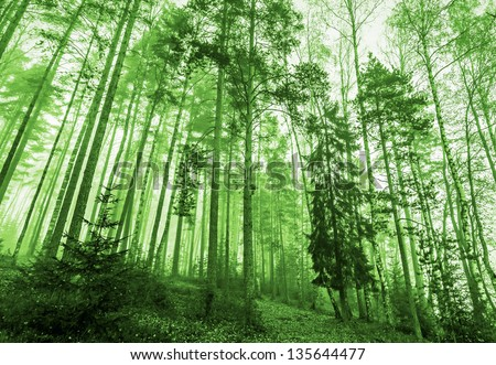 Green monochrome photo. Morning light in green forest with fog and tall trees - stock photo