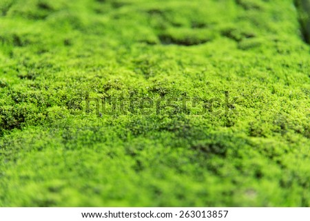 green moss background texture beautiful in nature - stock photo
