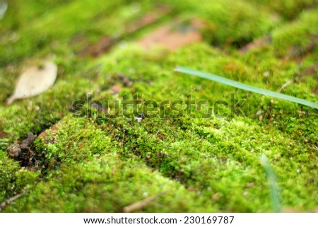 green moss in the nature - stock photo