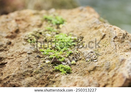 green moss in the nature. - stock photo