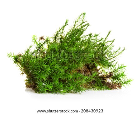 Green moss isolated on white bakground - stock photo