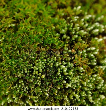 Green Moss Macro - stock photo