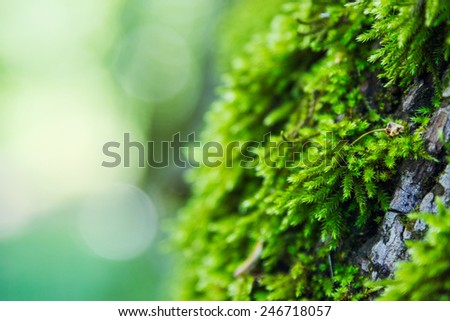 Green moss on defocused bokeh background - stock photo