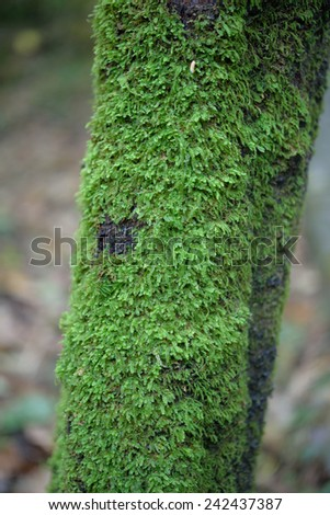 green moss on the tree - stock photo