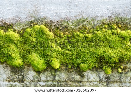 green moss on white wall - stock photo