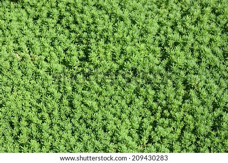 Green moss. Picture can be used as a background - stock photo