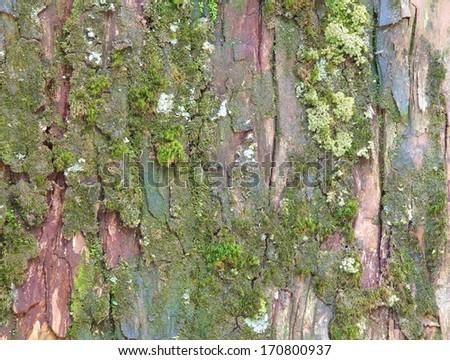Green Moss Seamless Tileable Texture  - stock photo