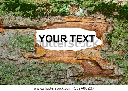 green moss tiled on tree and white field/moss on tree - stock photo
