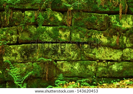 Green mossy wall background from the jungle - stock photo