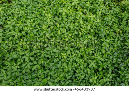 Green natural background of grass - stock photo