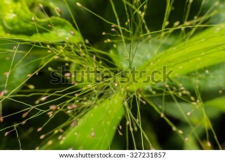 Green network wildflower vegetation blur and soft focus - stock photo