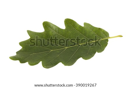 Green oak leaf isolated on white with clipping path  - stock photo