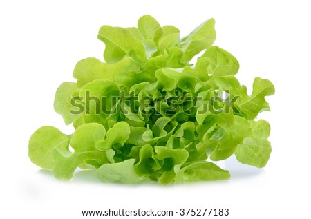Green oak lettuce on white background - stock photo