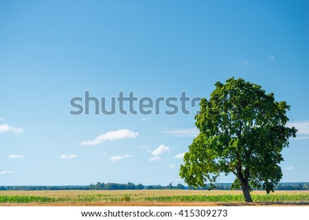 green oak tree in a field on a sunny day - stock photo