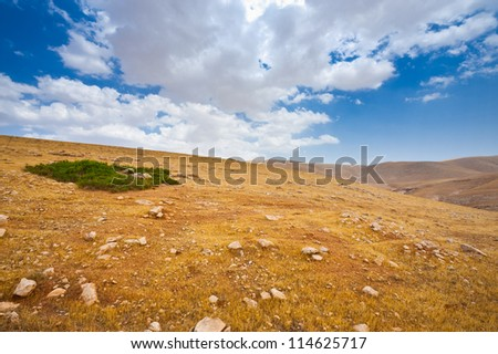 Green Oasis and Big Stones in Sand Hills of Samaria, Israel - stock photo
