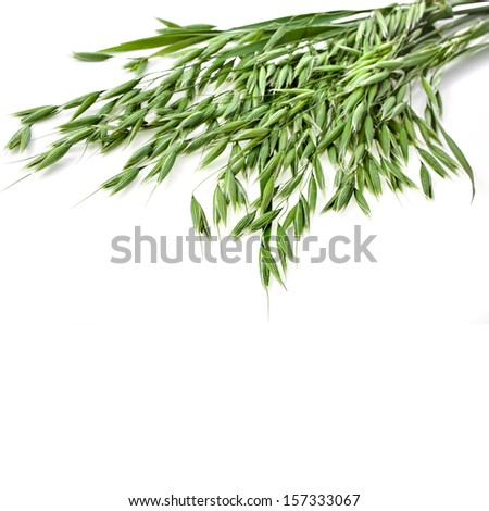 green oat seeds close up isolated on white background  - stock photo
