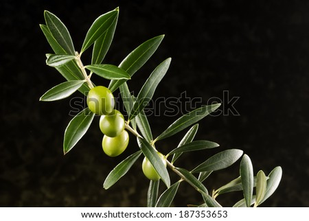 green olives on olive tree branch - stock photo