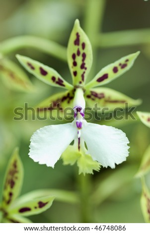 Green Orchid Single - stock photo