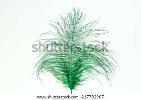 Green ostrich feather close up - stock photo